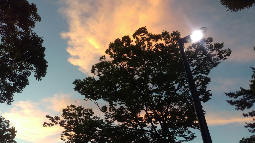b3_tree